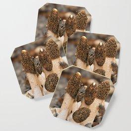 Fungi Coaster