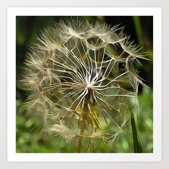 Tragopogon Wildflower Salsify Art Print