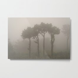 Four Pine Trees in the Fog Metal Print