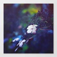 hydrangea Canvas Prints featuring Hydrangea by Nikita Gill