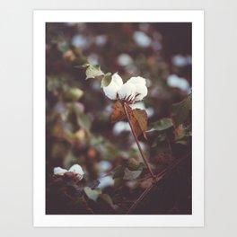 Cotton Flower 2 Art Print