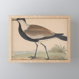 Vintage Print - A History of the Birds of Europe (1859) - Spur-Winged Plover Framed Mini Art Print