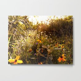 From a hike Metal Print