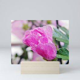 Pink Musk Mallow Rolled-up Mini Art Print