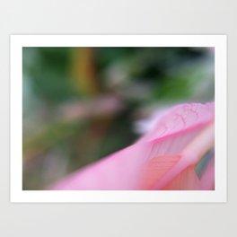 *Blush Art Print