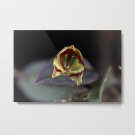 Lepanthes felis Metal Print