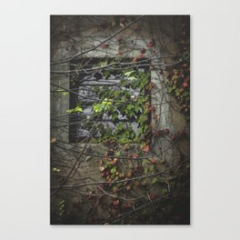 Vines Over a Window Canvas Print