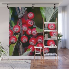 Brilliant red autumn berries - Aronia fruit Wall Mural