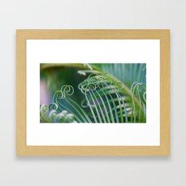 Palm frond spirals Framed Art Print