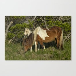 Chincoteague Foal No. 1 with Mother Canvas Print