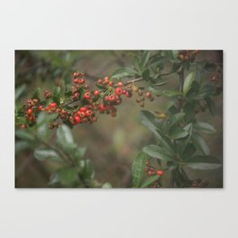 Clearance Bush Canvas Print