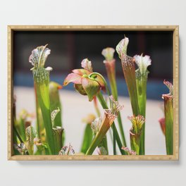 Pitcher Plants Serving Tray