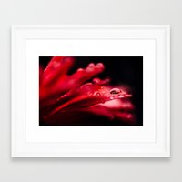 erotic Framed Art Prints featuring Erotic Gerbera by Tomas Hudolin