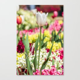 White tulip surrounded by flowers Canvas Print