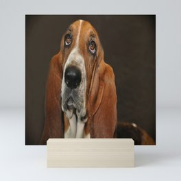 Lost In Thought Basset Hound Dog Mini Art Print