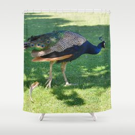 Peacock in the park Shower Curtain