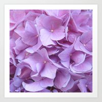 hydrangea Art Prints featuring Hydrangea by lillianhibiscus