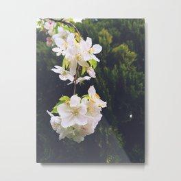 drooping blossom Metal Print