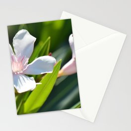 Olender 143 Stationery Cards