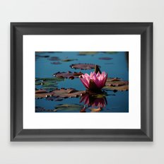 Water Lily 2 Framed Art Print