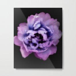 Indulgent Darkness, Violet Peony Metal Print