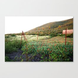 Baja: Red-orange Fence & Flowers Canvas Print