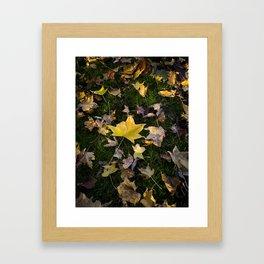 Golden in the Middle Framed Art Print