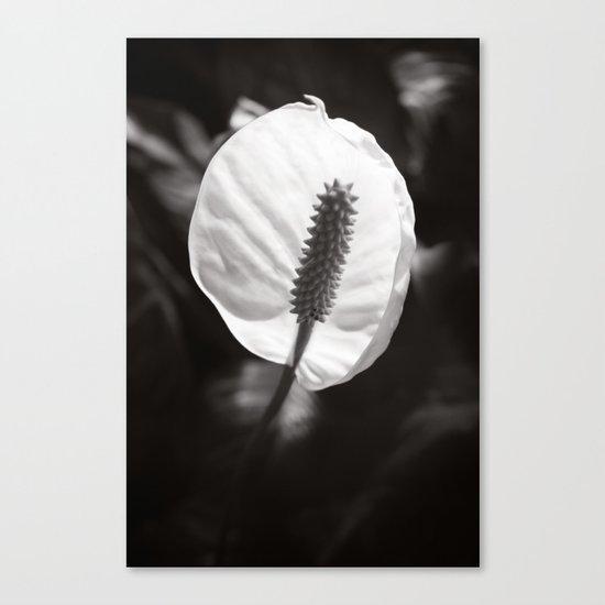 Secret Garden ~ No.2 Canvas Print