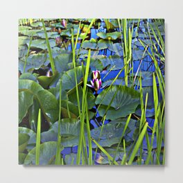Blue AQUATIC DREAMS of Water Lillies Metal Print