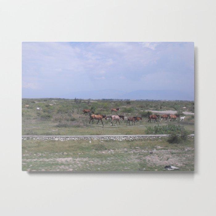 Horses in Haiti Metal Print