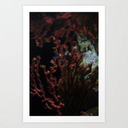 Barcelona Aquarium III Art Print
