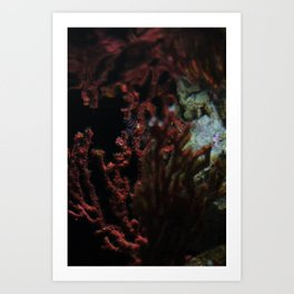 Barcelona Aquarium III Art Print