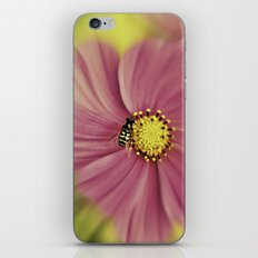 Hoverfly in the Pink iPhone & iPod Skin