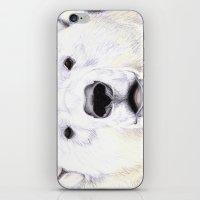 polar bear iPhone & iPod Skins featuring Polar Bear by StudioBlueRoom