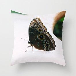 Closeup Butterfly 5 Throw Pillow