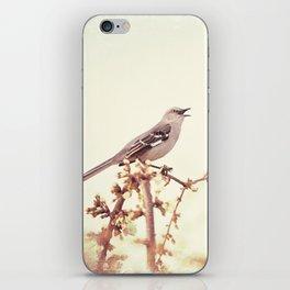 Mockingbird Bird Photography, Mocking Bird on Tree Branch, Nature Photograph iPhone Skin