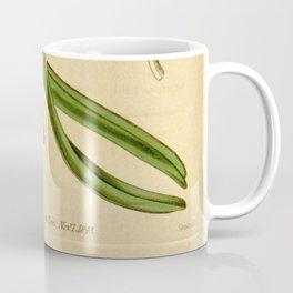 Aerides multiflora Coffee Mug