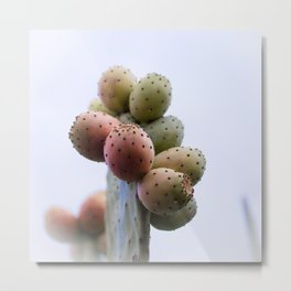 Prickly Pear Fruits Metal Print