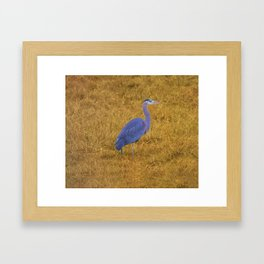 Great Blue Heron in the Grass Framed Art Print