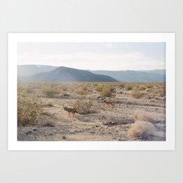 Panamint Valley Coyotes Art Print