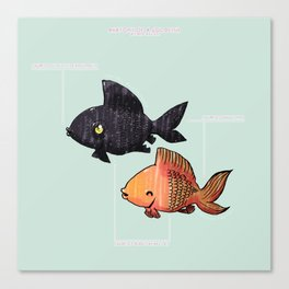 Anatomy Of A Goldfish Canvas Print