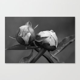 Unbloomed Flowers Canvas Print