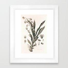 Catasetum hookeri Framed Art Print