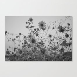 Moody Sunflowers Canvas Print