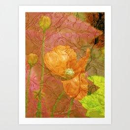 The last Poppys 2 Art Print