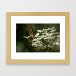 Butterfly on a Hydrangea Framed Art Print