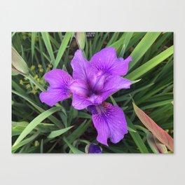 Flower I Canvas Print