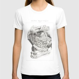 Human Anatomy Art Print LIVER STOMACH COLON Vintage Anatomy, doctor medical art, Antique Book Plate T-shirt