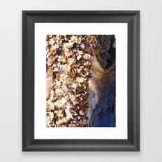 Shell Tree Framed Art Print