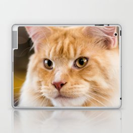Red-white tabby Maine Coon cat, close-up portrait Laptop & iPad Skin